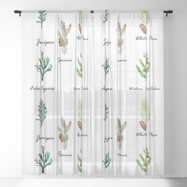Pine Branch Study Identification Botanical Chart Sheer Curtain