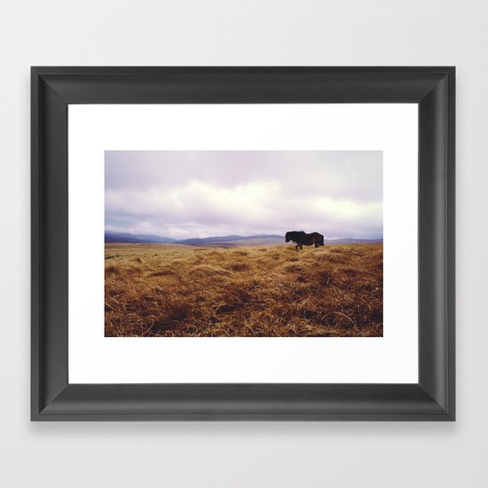 Wandering Horse Framed Art Print