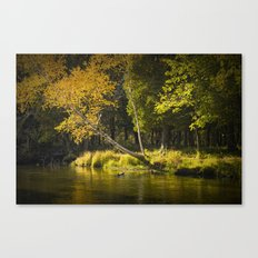 Autumn Scene of the Little Manistee River Canvas Print