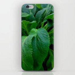 GREEN COMFREY LEAVES iPhone Skin