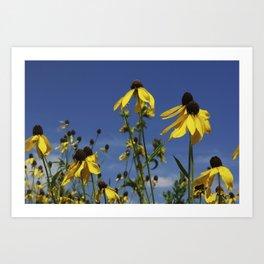 Yellow Coneflower, Ratibida, with azure prairie sky Art Print