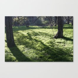 Shadows in the park Canvas Print