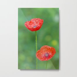 Two wet red poppies Metal Print
