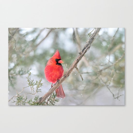 Winter's End Cardinal Canvas Print