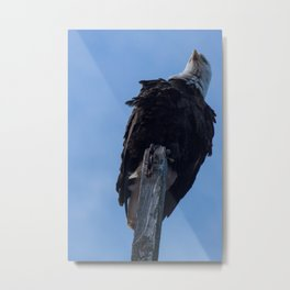 Bald Eagle Photography Print Metal Print