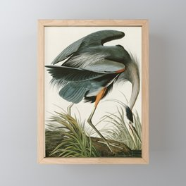 Great blue Heron - John James Audubon's Birds of America Print Framed Mini Art Print