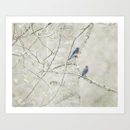 Bluebirds in Spring Art Print