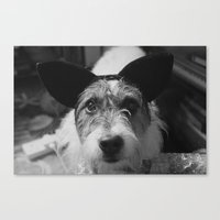 jack russell Canvas Prints featuring Jack Russell by Arianne Kenworthy Photography