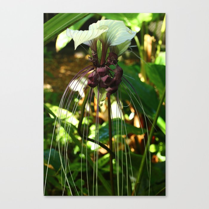 White Bat Flower Canvas Print By Christianeschulze Society6