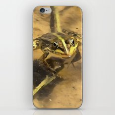 Marsh Frog iPhone & iPod Skin