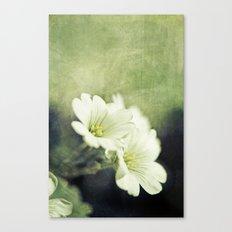 pretty in green. Canvas Print