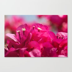 Bougainvillea 843 Canvas Print