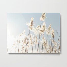 Reed in the sunlight Metal Print