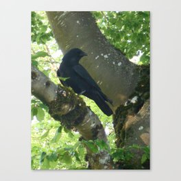 Crow in Tree Canvas Print