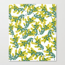 Australian Wattle Canvas Print