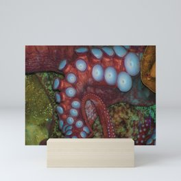 Octopus Arm Suckers Mini Art Print