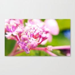hortensie traum in pink Canvas Print