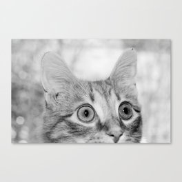 What's New KittyCat Canvas Print