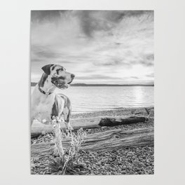 Harlequin Beach Sunset Poster