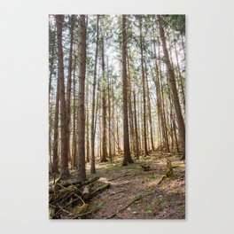Townsend Park Forest Canvas Print