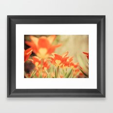 The View From Down Under Framed Art Print