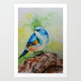 Colorful birdie Art Print