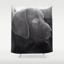 Exceptional Labrador Puppy Portrait Shower Curtain