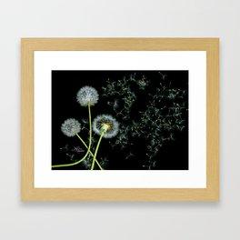 Blowing Dandelions, Scanography Framed Art Print