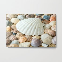 Sea Shells  -  Ocean, Sea, Nature Metal Print