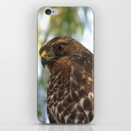 Young Red-Shouldered Hawk in a Desert Willow iPhone Skin