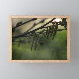Concept nature : Hazel alder buds Framed Mini Art Print