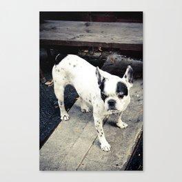 NY Pooch Canvas Print