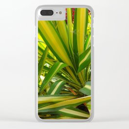 TROPICAL GREEN VARIEGATED AGAVE'S ART Clear iPhone Case