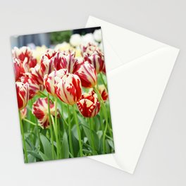 Striped tulips Stationery Cards