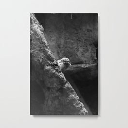 Golden Lion Tamarin in Black and White Metal Print