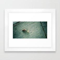 Zebra Spider Enjoys A Snack Framed Art Print