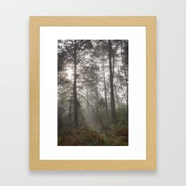 Calm morning... Into the foggy woods Framed Art Print