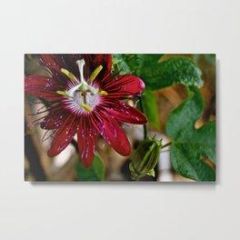 the flower Metal Print