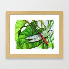 Scarlet Skimmer Framed Art Print