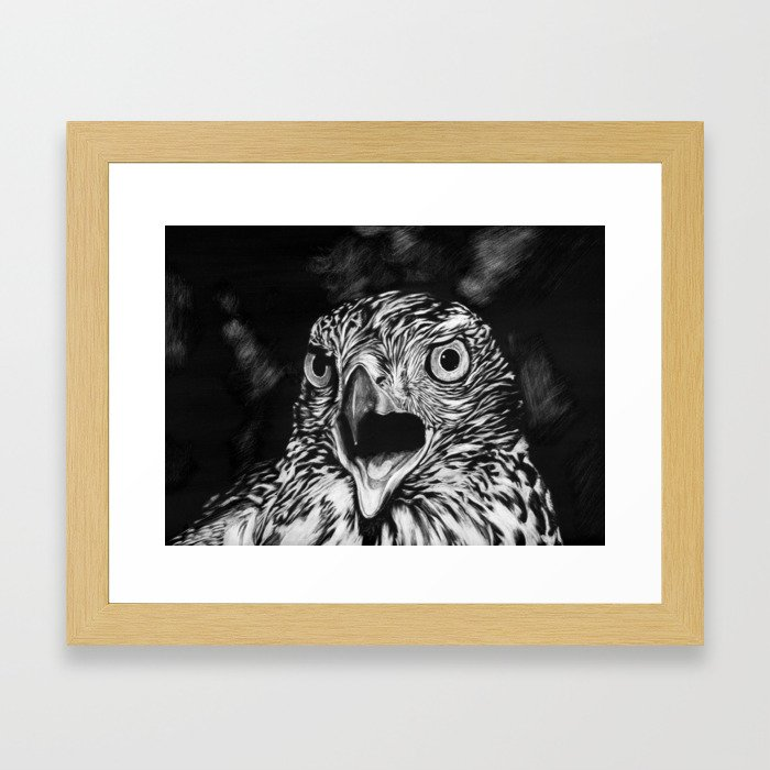 Fierce Falcon Framed Art Print