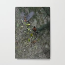Three Robins and a Berry Metal Print