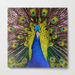 Peacocks Metal Print