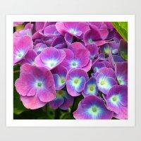 hydrangea Art Prints featuring Hydrangea by Trevor Jolley