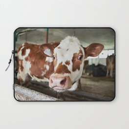 Calf in stalls at farm Laptop Sleeve