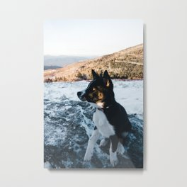 Dog by Will Swann Metal Print