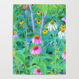 White and Purple Coneflowers and Yellow Rudbeckia Garden Poster