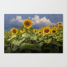Blooming Sunflowers against a Cloudy Blue Sky Canvas Print