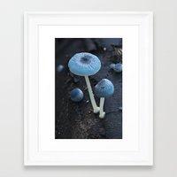 pixies Framed Art Prints featuring Pixies Parasol (Mycena interrupta) by Clusterpod