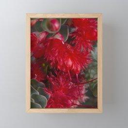 Scarlet Featherflower Framed Mini Art Print