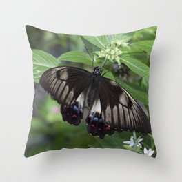 A Swallow tail Butterfly Throw Pillow